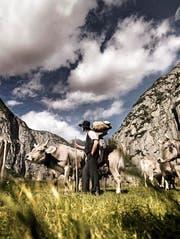 Die «Plakatkuh» Lena auf dem Originalfoto von «Tönis Brautfahrt» hat kürzlich gekalbert und ein Stierli namens Töni zur Welt gebracht. (Bild: Silvan Bucher)