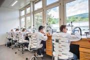 Die Uhrmacher von Carl F. Bucherer bei der Arbeit in der Manufaktur im bernischen Lengnau. (Bild: PD)