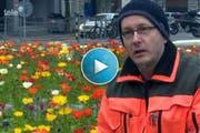 Fritz Bächle von der Stadtgärtnerei erläutert das Blühen des Isländischen Mohns. (Bild: Screenshot Tele 1)