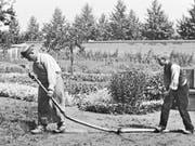 Gleich wird's nass: Szenenbild aus «Der begossene Gärtner» (1895), Slapstick à la Lumière. (Bild: Filmcoopi)