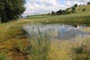 Die Stiftung unterstützte Projekte wie die Anlegung dieses Weihers in Willisau. (Bild: pd)