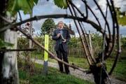 Der «J» Muscat ist der Stolz von Beat Felder vom Weingut Mariazell bei Sursee. Die weisse Assemblage ist national in der Spitzengruppe. Bild: Boris Bürgisser (18. Oktober 2016) (Bild Boris Bürgisser/LZ)
