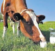Eine Kuh auf der Weide mit einem Glas Milch (Symbolbild). (Bild: pd)
