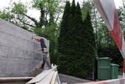 Um diese (zu hohen) Thujabäume an der Forchwaldstrasse in Walchwil stritten sich 2009 zwei Nachbarn. (Bild Werner Schelbert)