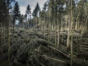 Blick in den zerstörten Wald. (Bild: Pius Amrein (Lieli, 8. Januar 2018))