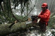 Ein Baum wird mit der Motorsäge entastet. (Archivbild Werner Schelbert/Neue ZZ)