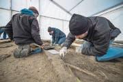 Archäologen sichern in Schötz Spuren der früheren Kapelle St. Johannes samt Friedhof. (Bild: Pius Amrein / LZ (Schötz, 13. Dezember 2017))