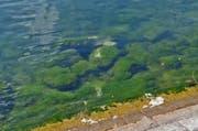 Der Kontakt des Bugwulsts mit dem Ufer hinterliess nur geringe Spuren. Helle Stellen im Wasser zeigen, dass Steine zu Bruch gingen. (Bild: Andreas Faessler (Zug, 17. September 2017))