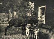 Die Frau des ersten Tierpark-Wärters Werner Schindelholz betreute in ihrem Kassenhäuschen längst nicht nur die zahlenden Gäste. (Bild PD)