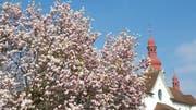 Blütenpracht vor der Dorfkirche in Buttisholz. (Bild: Leserbild: Willy Birrer)