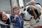 Die kleine Mara (2) möchte den Bernhardiner am liebsten mit nach Hause nehmen. Sie war gestern gemeinsam mit ihrer Mama Silvia Del Don bei der Aktion der Fondation Barry auf dem Kapellplatz in Luzern. (Bild Pius Amrein)