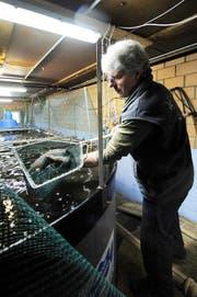 Vorreiter: Josef Kilchmann mästet seit 2011 Edelfische, so genannte Bachtellachse, im ehemaligen Schweinestall. (Archivbild Neue LZ)