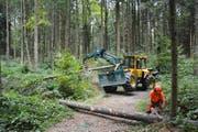 Mitarbeiter des Stadtforstamts bei der Durchforstung und Waldpflege im Roterwald. Bild: Stadtforstamt (Reussbühl, 4. September 2016)