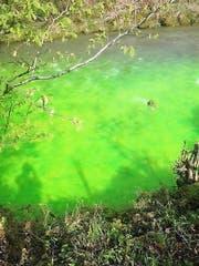 Die Steineraa färbte sich grün. (Bild: Leserreporter)