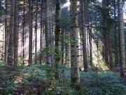 Die Korporation Hüswil (Gemeinde Zell) entschied, ihre Waldgrundstücke zu verkaufen und ihr Vermögen der Gemeinde Zell zu übertragen (Symbolbild). (Bild: Leserbild Josef Habermacher)