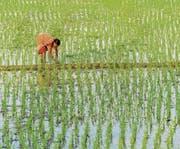 Die Bauern der Zukunft werden Frauen sein, sagt Bina Agarwal. (Bild: Frank Bienewald/Getty (Kalkutta, 2. Mai 2017))