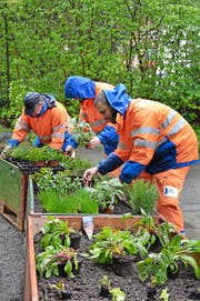 Urban Gardening im Bruchmattobel: Arbeiter beim Bepflanzen der Palettenhochbeete des mobilen Gemüsegartens. (Bild Sandra Monika Ziegler)