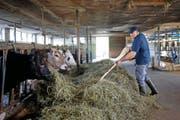 60 Milchkühe hat die Betriebsgemeinschaft Muriweid: Franz-Toni Imfeld im Stall. (Bild Maria Schmid)