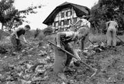 Heim- und Verdingkinder arbeiten in einer Armenerziehungsanstalt im Kanton Bern auf dem Feld. (Bild: Walter Studer/Keystone (Wattenwil, Juli 1954))