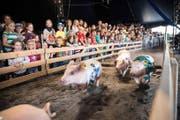 Angefeuert vom Publikum, rennen die Luga-Schweinchen jeden Tag um die Wette, als wäre es ihr letzter. (Bild Manuela Jans)