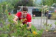Mario Bucher (25) pflanzt Gemüse im Schrebergarten Neuhof in Emmenbrücke. (Bild: Dominik Wunderli / Neue LZ)