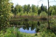 Ein Bijoux aus Wald, Wasser und viel Natur: Chüsenrainwald in Neuenkirch. (Bild: PD)