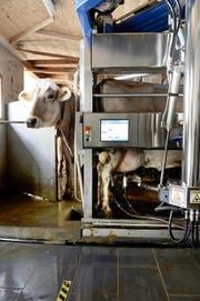 Melken mit dem Roboter: Auf dem Bauernhof von Patrick Egli in Geuensee ist das seit einigen Jahren Realität. (Bild Nadia Schärli)