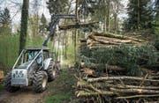 Nach wie vor grünt es im Wald – trotz Warnstufe 3. (Bild: Boris Bürgisser (Frauenthal, 11. April 2017))