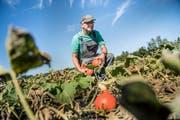 Der orange «Potimarron» gehört zu Toni Stalders Kürbis-Delikatessen. (Bild: Corinne Glanzmann)