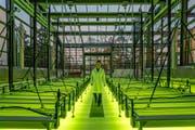 Das «Algentechnikum» sieht aus wie ein riesengrosses Gewächshaus und befindet sich auf dem Ludwig-Bökow-Campus in Ottobrunn bei München. (Bild: pd)