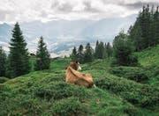 Auch das Entlebuch gehört zu den Landschaften von nationaler Bedeutung. (Bild: Christian Beutler/Keystone)