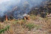 Das Feuer wurde von einem Feuerwerkskörper verursacht. (Bild: Luzerner Polizei)