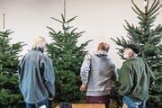 Wer ist der Schönste im ganzen Land? Produzenten begutachten verschiedene Christbäume. (Bild: Nadia Schärli (Römerswil, 14. September 2017))