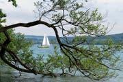 Segeln ja, aber Kitesurfen nein: Auf dem Hallwilersee bleibt das Kitesurfen verboten. (Bild: Leserbild Ruth Schönenberger)