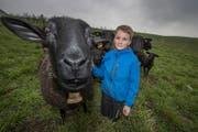 Die Schafe von Jonas und Fabian Amrein. (Bild: Pius Amrein (Sempach, 27.03.2018 ))