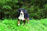 Die Lecky-Trails bieten den Hunden gemügend Sicherheit, sich auszutoben. (Bild: PD)