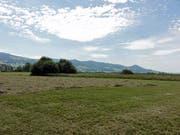 Das Nuoler Ried ist ein Flachmoor von nationaler Bedeutung und ein wichtiger Rastplatz sowie ein Brutgebiet für Vögel wie Kiebitze (Bild: zvg)