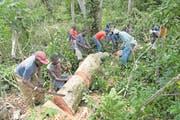 Arbeiter befreien eine Kaffeeplantage von umgestürzten Bäumen (Bild: Florian Kopp/SRK)