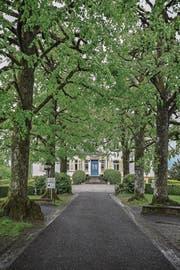 Von der St.-Niklausen-Strasse führt eine Allee zur Villa Krämerstein. (Bild: Nadia Schärli (Horw, 1. Mai 2017))