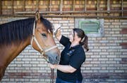 Heilen mit alternativen Methoden: Die ausgebildete Tierkinesiologin Melanie Buchmeier behandelt Lamberto mittels einer Farbtherapie. (Bild: Manuela Jans-Koch / Neue LZ)