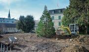 Der «Nachkomme» des Chamer Mammutbaums wurde kürzlich gepflanzt. (Bild: Maria Schmid (Cham, 22. November 2017))