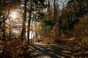 Wald im Herbstkleid bei Horw. (Archivbild Manuela Jans-Koch)