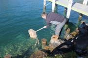 Die eingefangenen Seeforellen werden wohlbehalten wieder in ihre Freiheit entlassen. (Bild: PD)