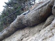 Die Schutznetze sind voll mit Geröll. An der Rigi droht akute Steinschlaggefahr. (Bild: PD (Goldau, 22. Februar 2017))