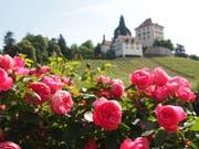Rosengarten auf Heidegg, wenn nicht jetzt, wann dann? (Bild: Leserbild: Rita Räber)