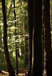 Ort der Erholung und der möglichen medizinischen Heilung: der Wald. (Bilder: Donato Caspari, Reto Martin)