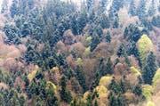 In der Region Zentralschweiz war es in Flühli und in Sattel am kältesten. (Symbolbild LZ)