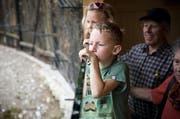 Vielleicht etwas weniger, aber offensichtilch nicht minder interessierte Besucher beobachten hier im Mai 2014 die Wildkatzen im Natur- und Tierpark in Goldau. (Bild: Manuela Jans / Neue LZ)