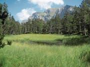Der Pilatussee, wie er sich im Sommer präsentiert: Hier soll sich die Natur künftig frei entwickeln. (Bild: Adrian von Moos/Kanton Luzern)