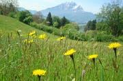 In Meggen soll der Bestand an ungedüngten Mähwiesen erhöht werden. (Bild pd)